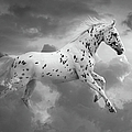 Leopard Appaloosa Cloud Runner by Renee Forth-Fukumoto