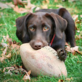 Let's Play Football by Lori Deiter