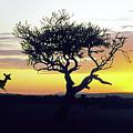 Serengeti National Park in Tanzania, East Africa