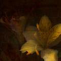 Lilies II by Bonnie Bruno