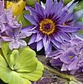 Lilies No. 38 by Anne Klar