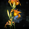 Lily In Monets Garden by Avalon Fine Art Photography