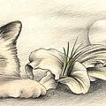 Lily The Birman by Johanna Pieterman