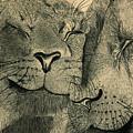 Lions In Love by Ramneek Narang