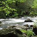 Litltle River 1 by Marty Koch