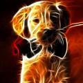 Little Puppy In Love by Pamela Johnson