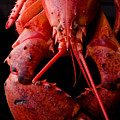 Lobster by Jim DeLillo