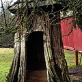 Loggers Outhouse by Clayton Bruster