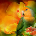 Love Among The Hibiscus by Carol Cavalaris