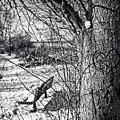 Love On A Tree by CJ Schmit