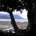 Low Tide And The Tree by Kathy Yates
