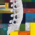 Lumbar Spine by Sara Young