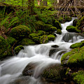 Lush Stream by Mike Reid
