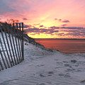 Magenta Sunrise by Vicki Jauron
