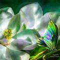 Magnolia by Carol Cavalaris