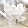 Magnolia Flower by Elena Elisseeva