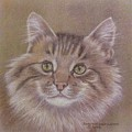 Maine Coon Cat by Dorothy Coatsworth