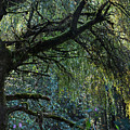 Majestic Weeping Willow by Marion McCristall