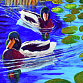 Mallards In The Pads by Bob Crawford
