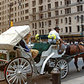 Manhattan Buggy Ride by Madeline Ellis