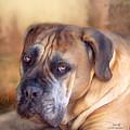 Mastiff Portrait by Carol Cavalaris