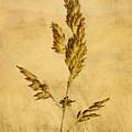 Meadow Grass by John Edwards