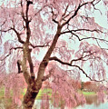 Meet Me Under The Pink Blooms Beside The Pond - Holmdel Park by Angie Tirado