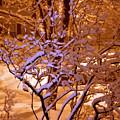 Midnight Snow by Ellen Andrews