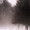 Misty by Linda Shafer