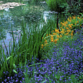 Monet's Lily Pond by Kathy Yates