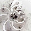 Monochrome Flower by Amanda Moore