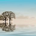 Moody Trees by Jean Noren