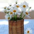 Morning daisies Print by Elena Elisseeva