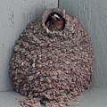 Mud Nest  by Pamela Walrath