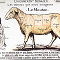 Mutton by French School