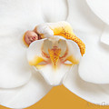 Nakeeta In Moth Orchid by Anne Geddes