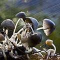 Nature by Avalon Fine Art Photography