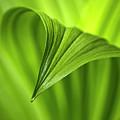 Nature Unfurls by Christina Rollo
