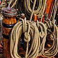 Nautical Knots 17 Oil by Mark Myhaver
