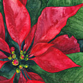 Navidad by Casey Rasmussen White