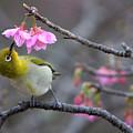 Nectar by Karen Walzer