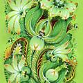 Neptunes Flowers by Olena Kulyk