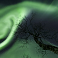 Northern Lights In The Arctic by Arild Heitmann