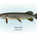 Northern Pike by Ralph Martens