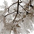 Oak Leaves by Frank Tschakert