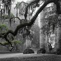 Oak Limb At Old Sheldon Church by Scott Hansen