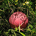 Old Basketball In The Grass by Robert Sawin