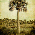 Old Florida Palm by Rich Leighton