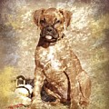 Old Time Boxer Portrait by Angie Tirado