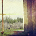 Old Window Looking Out To Apple Orchard by Sandra Cunningham